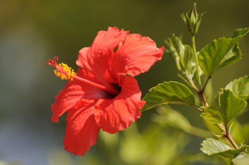 Namibia´s Blüten